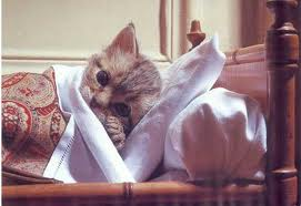 kitten sick