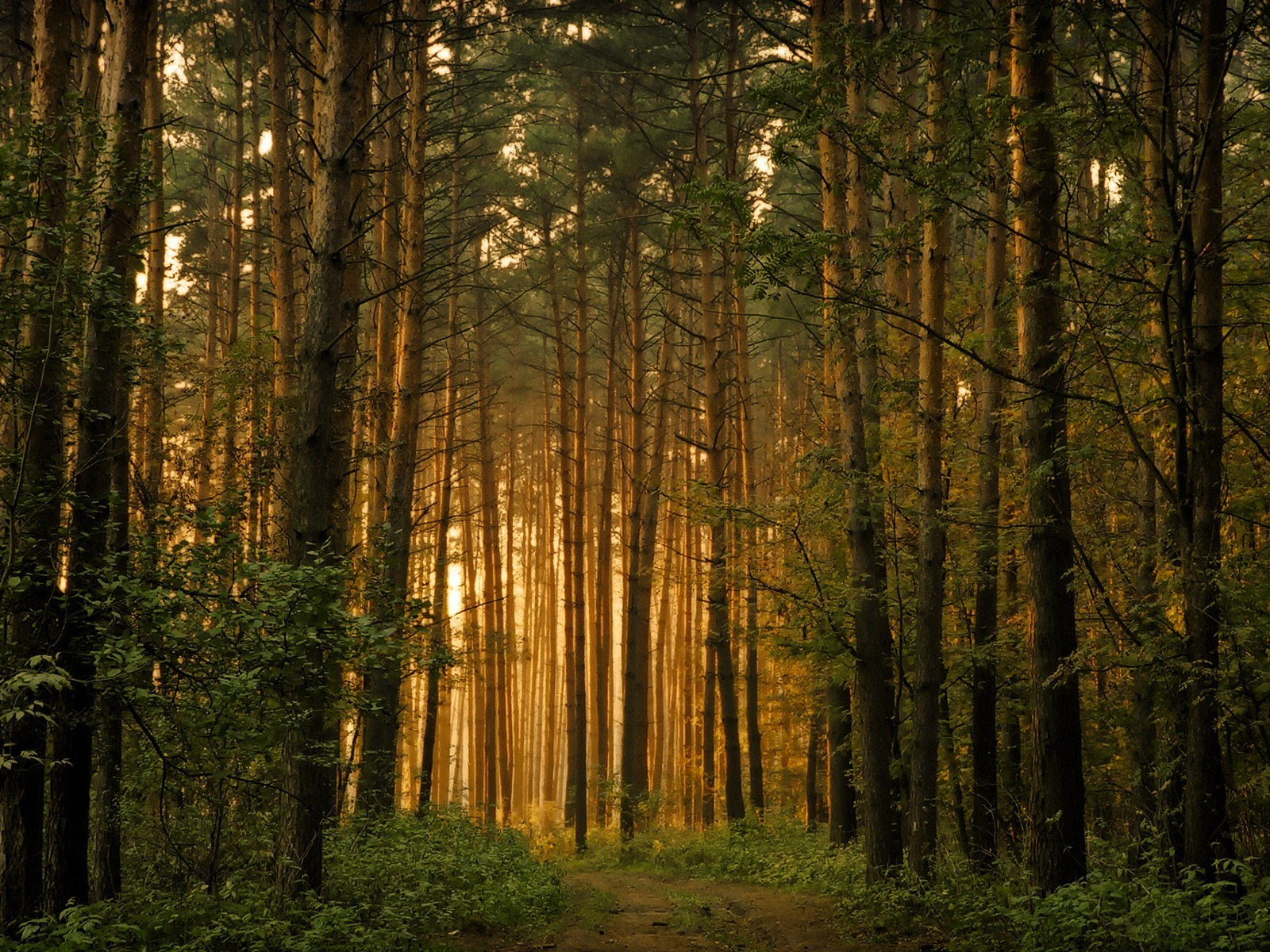 forest_trees_wallpaper_landscape_nature_wallpaper_1600_1200_1218