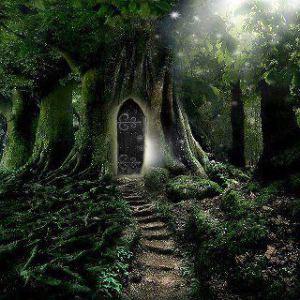 door in tree