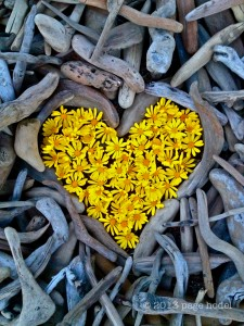 bills driftwood and yellow daiseys©10x10