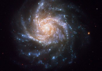 A bluish-white spiral galaxy hangs delicately in the cold vacuum of space. Known as NGC 1376, this snowflake-shaped beauty was observed with the Hubble Space Telescope. Concentrated along the spiral arms of NGC 1376, bright blue knots of glowing gas highlight areas of active star formation. These regions show an excess of light at ultraviolet (UV) wavelengths because they contain brilliant clusters of hot, newborn stars that are emitting UV light. The less intense, red areas near the core and between the arms consist mainly of older stars. The reddish dust lanes delineate cooler, denser regions where interstellar clouds may collapse to form new stars. Visually intermingled between the spiral arms is a sprinkling of reddish background galaxies. NGC 1376 resides over 180 million light-years away from Earth in the constellation Eridanus. This galaxy belongs to a class of spirals that are seen nearly face on from our line of sight. Its orientation aids astronomers in studying details and features of the galaxy from a relatively unobscured vantage point. One such feature is represented by stars that vary in brightness over time. In 1990, NGC 1376 was home to a supernova explosion (SN 1990go) that rivaled the brightness of the entire nucleus (as seen from ground-based telescopes) for several weeks. The story of how this galaxy came to be photographed by Hubble is somewhat unique. During the November 2006 observations of a nearby dwarf galaxy with Hubble's Near Infrared Camera and Multi-Object Spectrometer (NICMOS) detector, careful planning allowed for NGC 1376 to be visible in the field of view of the Advanced Camera for Surveys (ACS) at the same time. Thus, Hubble was able to get two galaxies for the price of one. Although the use of parallel instruments onboard Hubble is not uncommon, capturing two interesting targets is rather rare. Initial ground-based observations of NGC 1376 and its nearby dwarf companion implied that the two might be interacting with each other, b